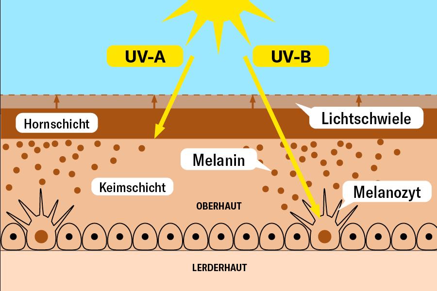 Grafik wie die Sonne die Haut bräunt